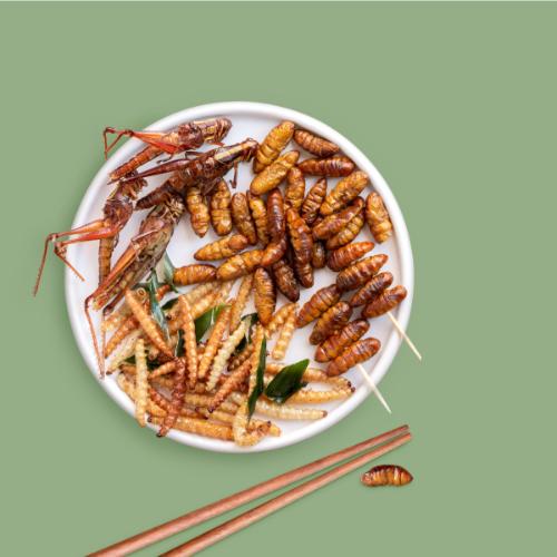 Insecten geen echte vleesvervanger, maar wel een bron van dierlijke eiwitten