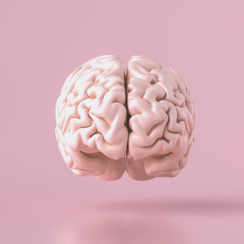 Koolhydraten belangrijk voor onze hersenen