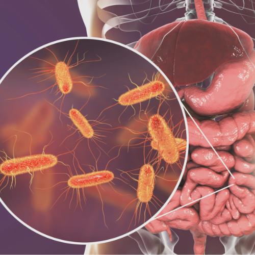 Darm microbioom