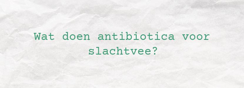 Wat doen antibiotica voor slachtvee?